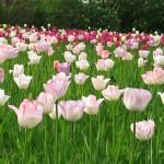 Wann ist der Garten am schönsten?