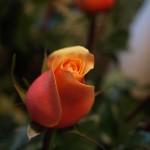 Zu Besuch … bei der Blumenfrau im Kiez