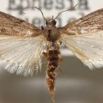 Projekt: Mehlmottenvernichtungsfeldzug Alpha – gamma – delta