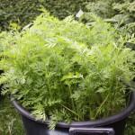 Der beliebig erweiterbare und frei kombinierbare 50-Liter-Garten