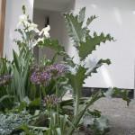 Pflanzen (fast) ohne Fehl und Tadel