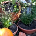 Der Herbst ist gekommen, die Gräser schlagen aus