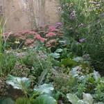Pflanzen (fast) ohne Fehl und Tadel – die Fette Henne