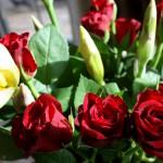 Rosen zum Mittwoch