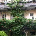 Balkon: Madam Galen, übernehmen Sie!