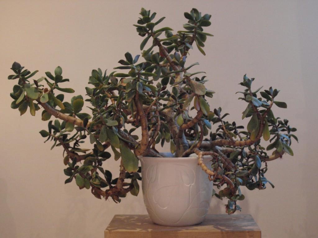 geldbaum hochzeit cheap schritt geldbaum with geldbaum hochzeit interesting homyl kristall. Black Bedroom Furniture Sets. Home Design Ideas