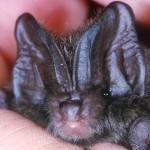 It´s a bat, bat night