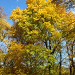 Herbst in Farbe