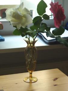 Gartenrosen (1)