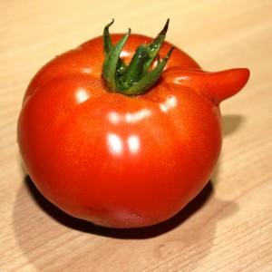 Pinoccio-Tomate