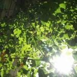 Die Klettertrompete 2013: Keine Lust auf Herbst